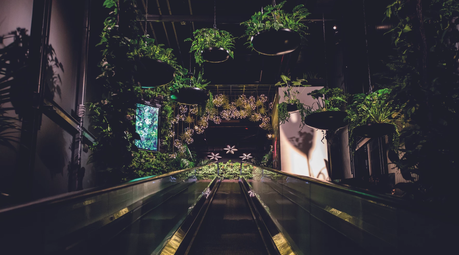 Floriworld, Hollandia